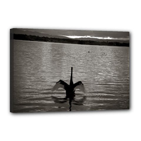 Swan, Canberra 12  X 18  Framed Canvas Print by artposters