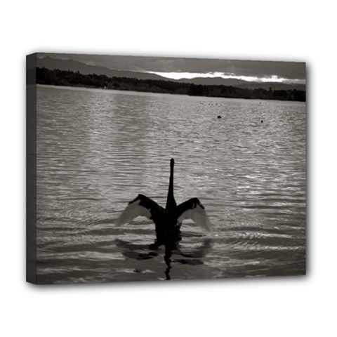 Swan, Canberra 11  X 14  Framed Canvas Print by artposters
