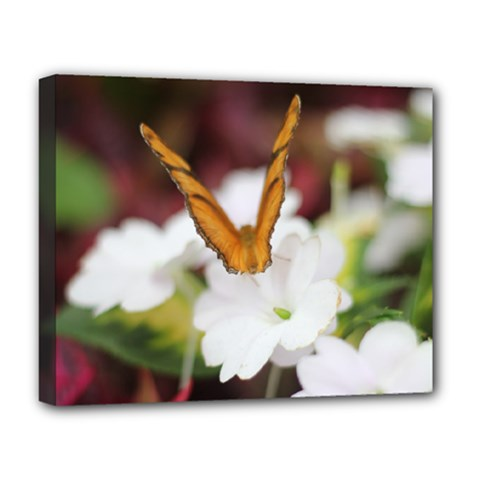 Butterfly 159 Deluxe Canvas 20  X 16  (framed) by pictureperfectphotography