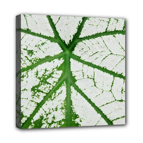 Leaf Patterns Mini Canvas 8  X 8  (framed) by natureinmalaysia