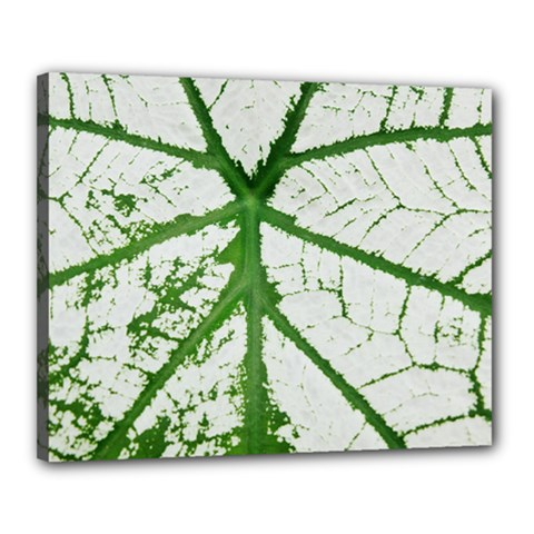 Leaf Patterns Canvas 20  X 16  (framed) by natureinmalaysia