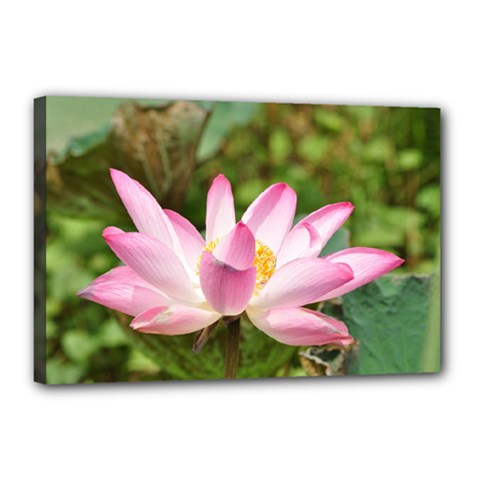 A Pink Lotus Canvas 18  X 12  (framed) by natureinmalaysia