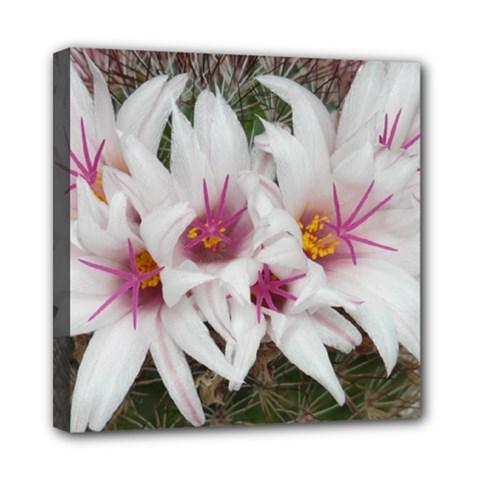 Bloom Cactus  Mini Canvas 8  X 8  (framed) by ADIStyle