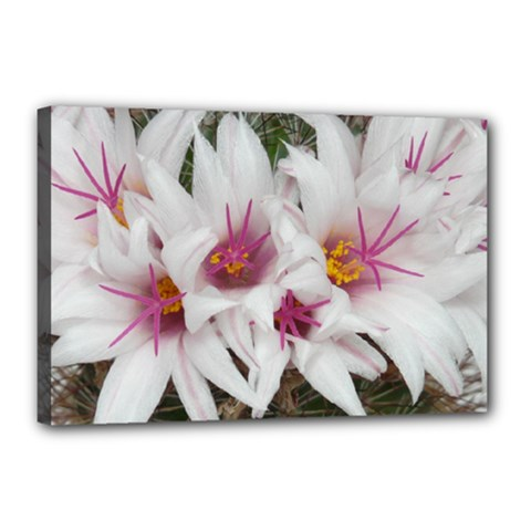 Bloom Cactus  Canvas 18  x 12  (Framed) by ADIStyle
