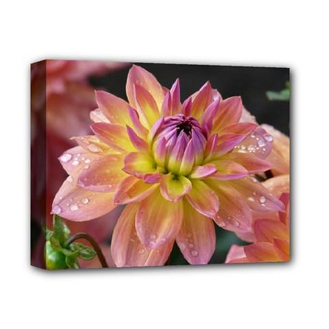 Dahlia Garden  Deluxe Canvas 14  X 11  (framed) by ADIStyle