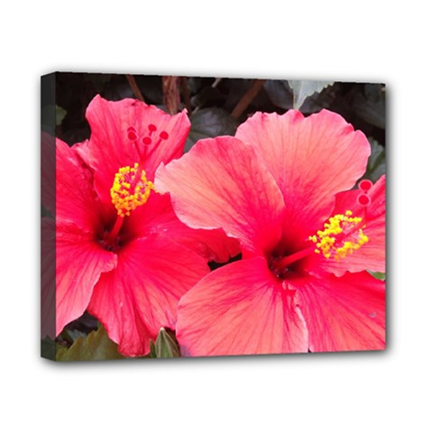 Red Hibiscus Canvas 10  X 8  (framed) by ADIStyle