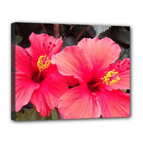 Red Hibiscus Canvas 14  X 11  (framed) by ADIStyle