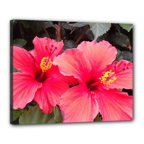 Red Hibiscus Canvas 20  X 16  (framed) by ADIStyle