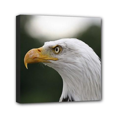 Bald Eagle (1) Mini Canvas 6  X 6  (framed) by smokeart