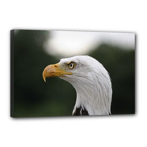 Bald Eagle (1) Canvas 18  X 12  (framed) by smokeart