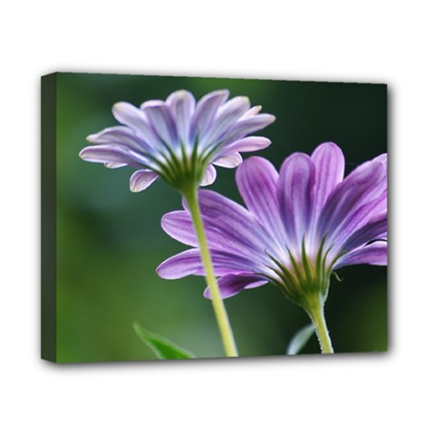 Flower Canvas 10  X 8  (framed) by Siebenhuehner