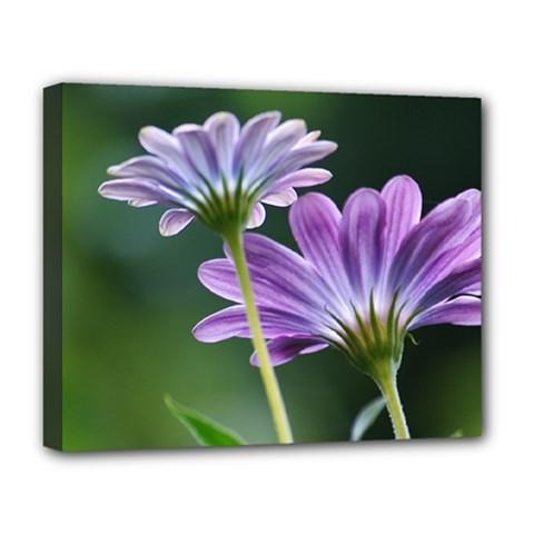 Flower Deluxe Canvas 20  X 16  (framed) by Siebenhuehner