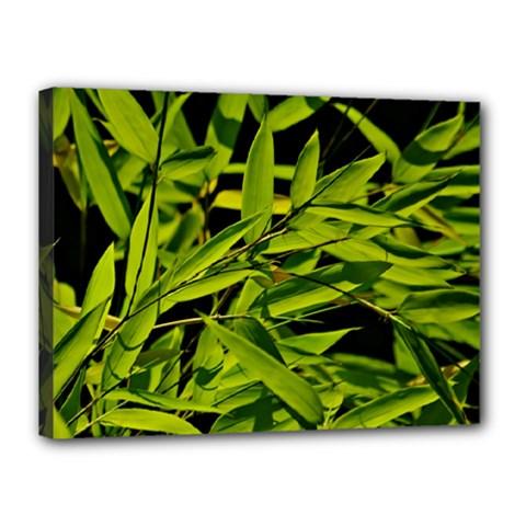 Bamboo Canvas 16  X 12  (framed) by Siebenhuehner