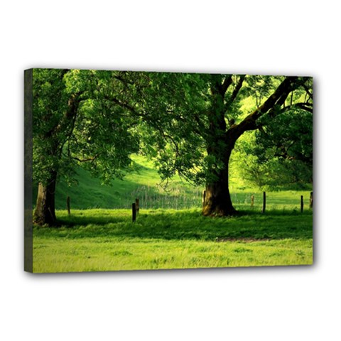 Trees Canvas 18  X 12  (framed) by Siebenhuehner
