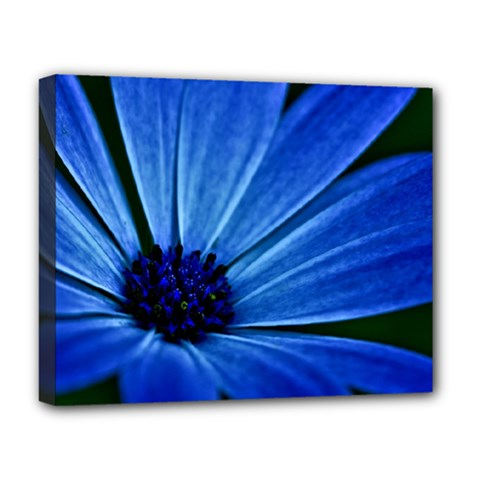 Flower Deluxe Canvas 20  X 16  (framed) by Siebenhuehner