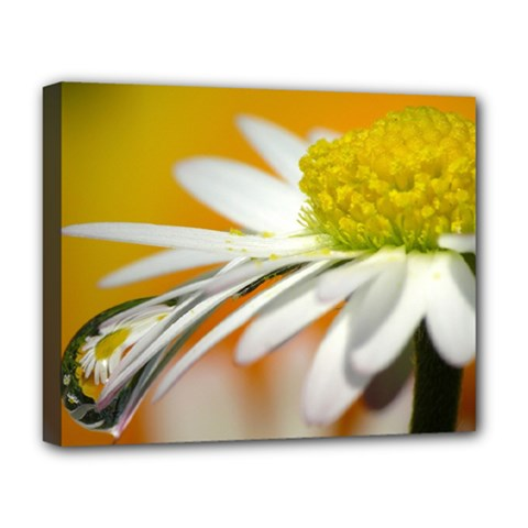 Daisy With Drops Deluxe Canvas 20  X 16  (framed) by Siebenhuehner