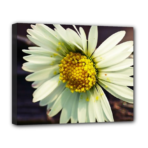 Daisy Deluxe Canvas 20  X 16  (framed) by Siebenhuehner