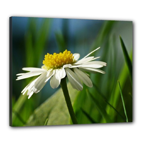Daisy Canvas 24  X 20  (framed) by Siebenhuehner