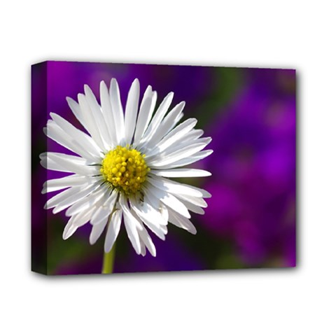 Daisy Deluxe Canvas 14  X 11  (framed) by Siebenhuehner
