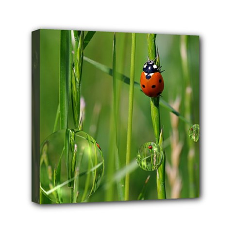Ladybird Mini Canvas 6  X 6  (framed) by Siebenhuehner