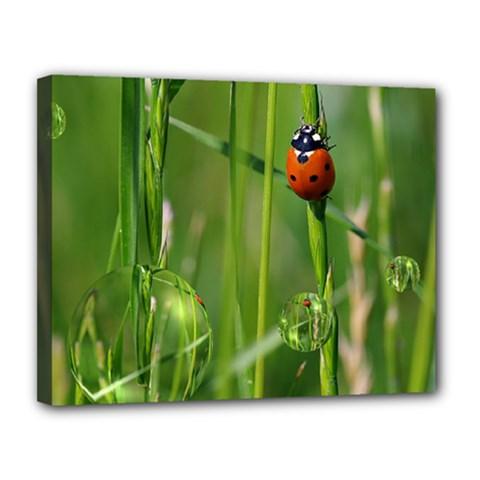Ladybird Canvas 14  X 11  (framed) by Siebenhuehner
