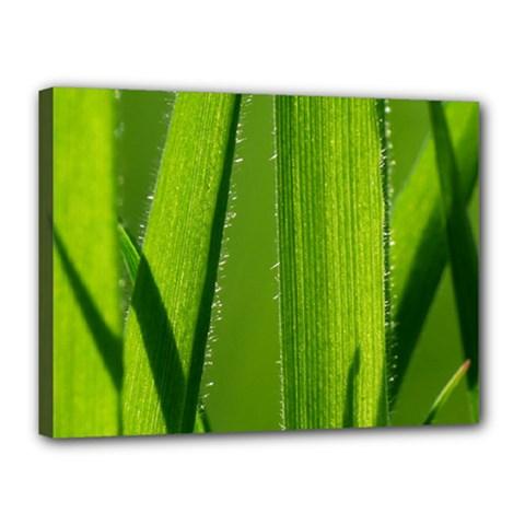 Grass Canvas 16  X 12  (framed) by Siebenhuehner