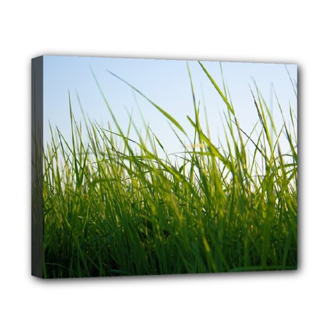 Grass Canvas 10  X 8  (framed) by Siebenhuehner