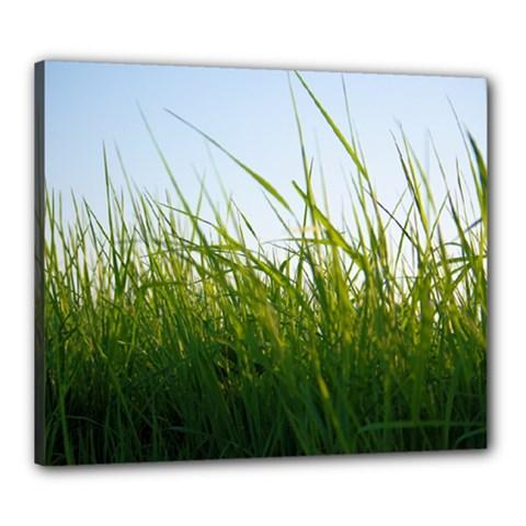 Grass Canvas 24  X 20  (framed) by Siebenhuehner