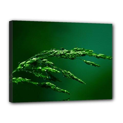 Waterdrops Canvas 16  X 12  (framed) by Siebenhuehner