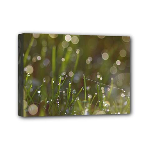 Waterdrops Mini Canvas 7  X 5  (framed) by Siebenhuehner