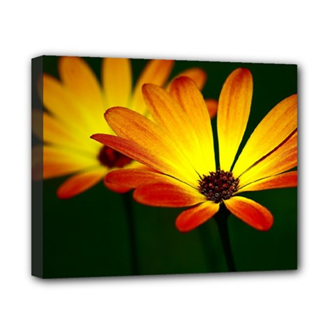 Osterspermum Canvas 10  X 8  (framed) by Siebenhuehner