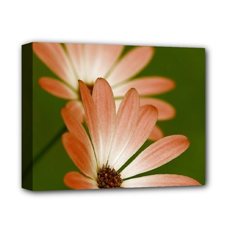 Osterspermum Deluxe Canvas 14  X 11  (framed) by Siebenhuehner