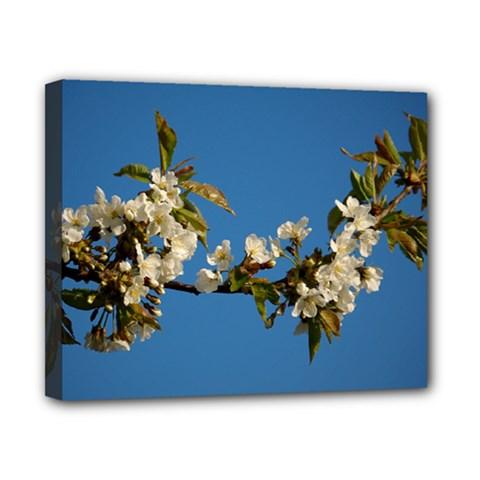 Cherry Blossom Canvas 10  X 8  (framed) by Siebenhuehner
