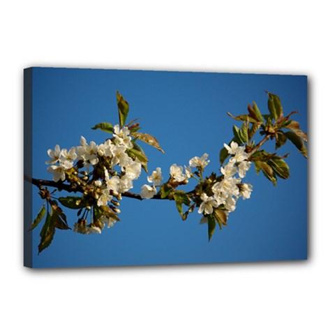 Cherry Blossom Canvas 18  X 12  (framed) by Siebenhuehner