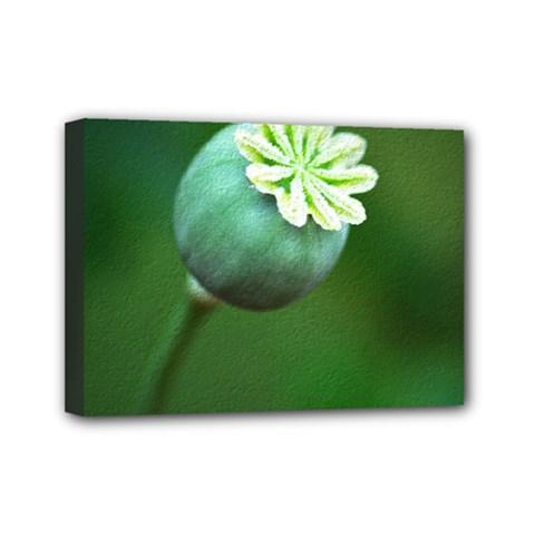 Poppy Capsules Mini Canvas 7  X 5  (framed) by Siebenhuehner