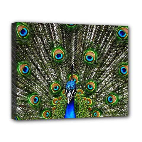 Peacock Deluxe Canvas 20  X 16  (framed) by Siebenhuehner