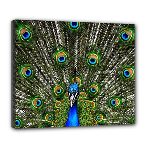 Peacock Deluxe Canvas 24  X 20  (framed) by Siebenhuehner