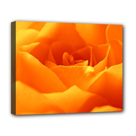 Rose Deluxe Canvas 20  X 16  (framed) by Siebenhuehner