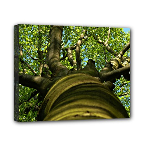Tree Canvas 10  X 8  (framed) by Siebenhuehner