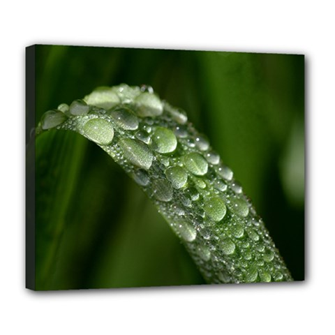 Grass Drops Deluxe Canvas 24  X 20  (framed) by Siebenhuehner