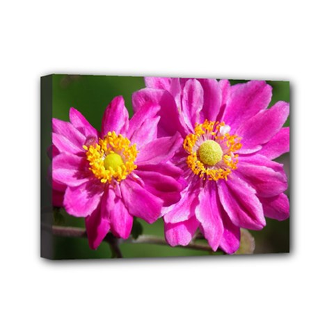 Flower Mini Canvas 7  X 5  (framed) by Siebenhuehner
