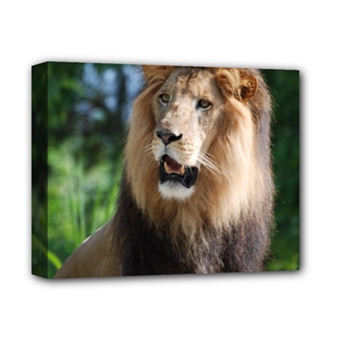 Regal Lion Deluxe Canvas 14  X 11  (framed) by AnimalLover