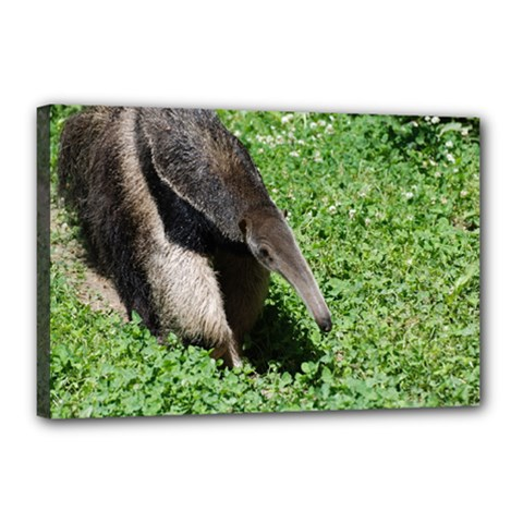 Giant Anteater Canvas 18  X 12  (framed) by AnimalLover