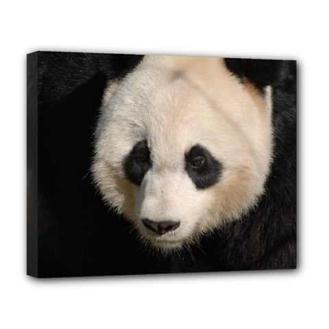 Adorable Panda Deluxe Canvas 20  X 16  (framed) by AnimalLover