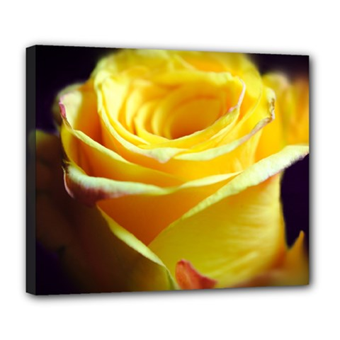 Yellow Rose Curling Deluxe Canvas 24  X 20  (framed) by bloomingvinedesign
