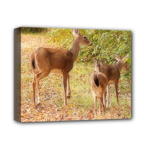 Deer in Nature Deluxe Canvas 14  x 11  (Framed) by uniquedesignsbycassie