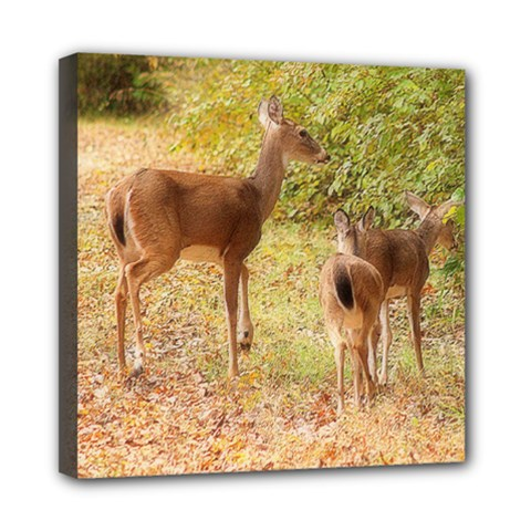 Deer In Nature Mini Canvas 8  X 8  (framed) by uniquedesignsbycassie