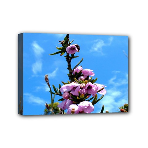 Pink Flower Mini Canvas 7  X 5  (framed)