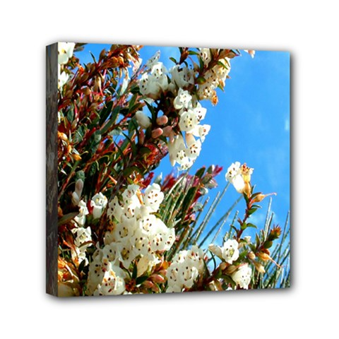 Australia Flowers Mini Canvas 6  x 6  (Framed) by Rbrendes