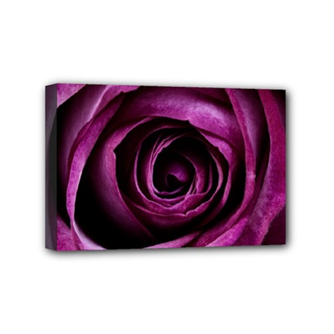 Deep Purple Rose Mini Canvas 6  X 4  (framed) by Colorfulart23